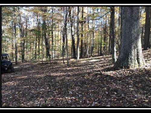 The Woods at Zaleski : McArthur : Vinton County : Ohio