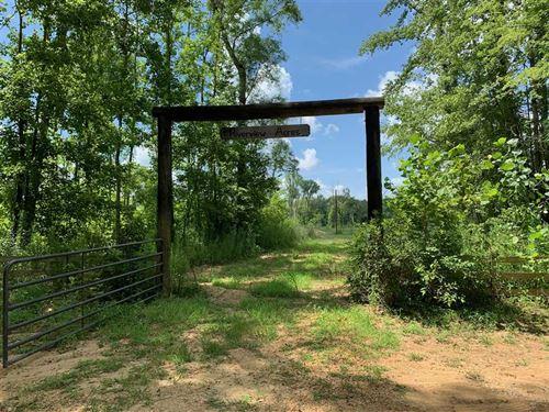 40 Acres on Black Warrior River CA : Moundville : Hale County : Alabama