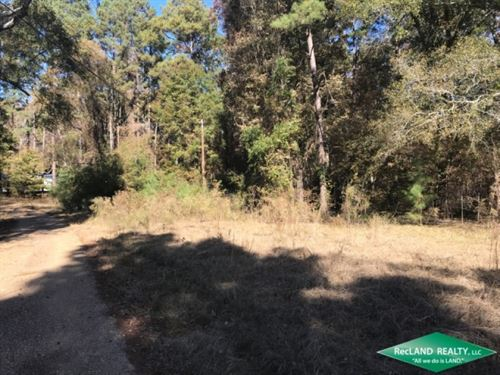 15.5 Ac, Timberland For Home Site : Rocky Branch : Union Parish : Louisiana