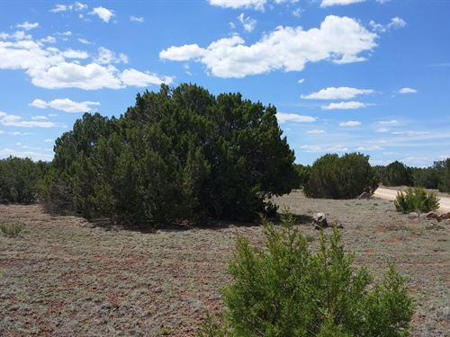 1.16 Acre With Trees in Concho : Concho : Apache County : Arizona