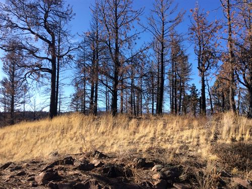 Private Forest at Affordable Price : Fort Garland : Costilla County : Colorado