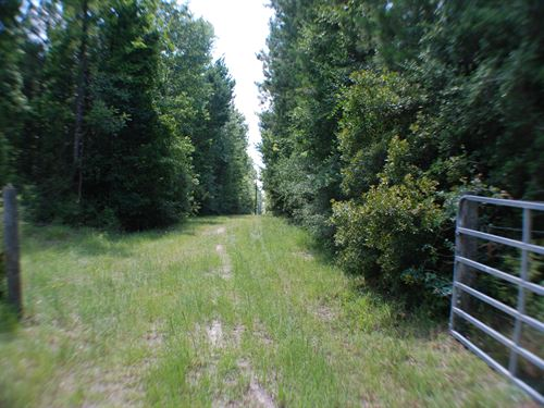 77 Acres in East Texas : Corrigan : Polk County : Texas