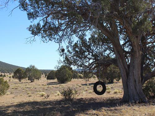 Land Well Borders Public Lands : Seligman : Yavapai County : Arizona