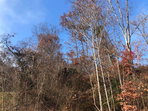 1.19 Acre Lot in Rogersville, TN : Rogersville : Hawkins County : Tennessee