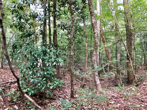 Beautiful Hunting Land : Woodville : Wilkinson County : Mississippi