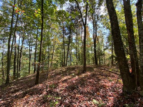 2.85+/- Acres Wooded Bluff Tract : South Pittsburg : Marion County : Tennessee