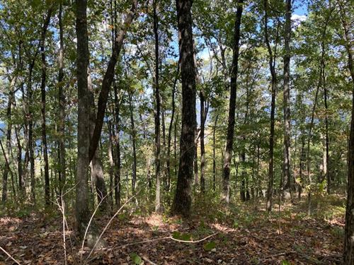 5.58+/- Acres Wooded Bluff Tract : South Pittsburg : Marion County : Tennessee