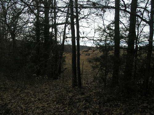 Hunting Spot On The Ridge : Cabool : Texas County : Missouri