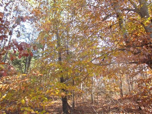 Over 6 Acres Lunenburg County, VA : Victoria : Lunenburg County : Virginia