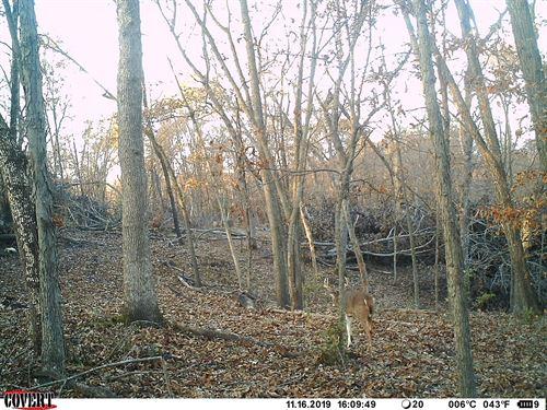 Heavily Timbered Hunting Tract : Hamilton : Marion County : Iowa