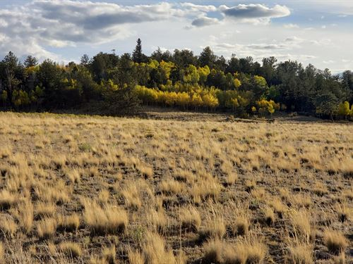 5.56 Acre Rolling Hills & Mountains : Hartsel : Park County : Colorado