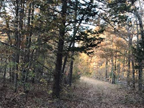61 Acres Woods Near Mountain View : Mountain View : Stone County : Arkansas
