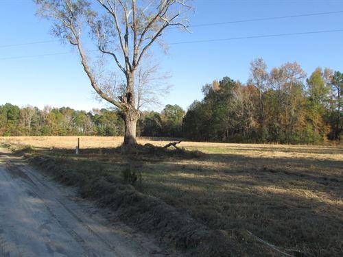 Panola-Eagerton Road Tract : Pinewood : Clarendon County : South Carolina