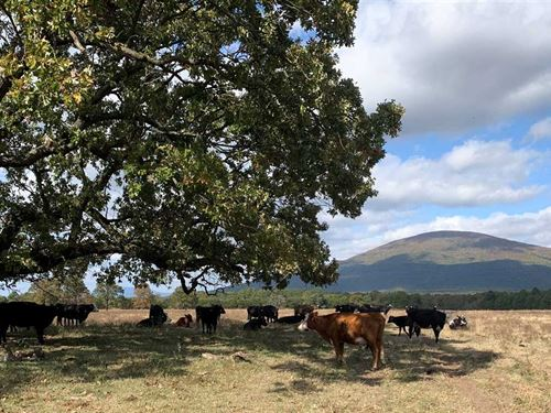 612 Ac Cattle Farm And Ranch : Hartford : Sebastian County : Arkansas