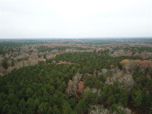 Timberland Sealed Bid East Texas : Atlanta : Cass County : Texas