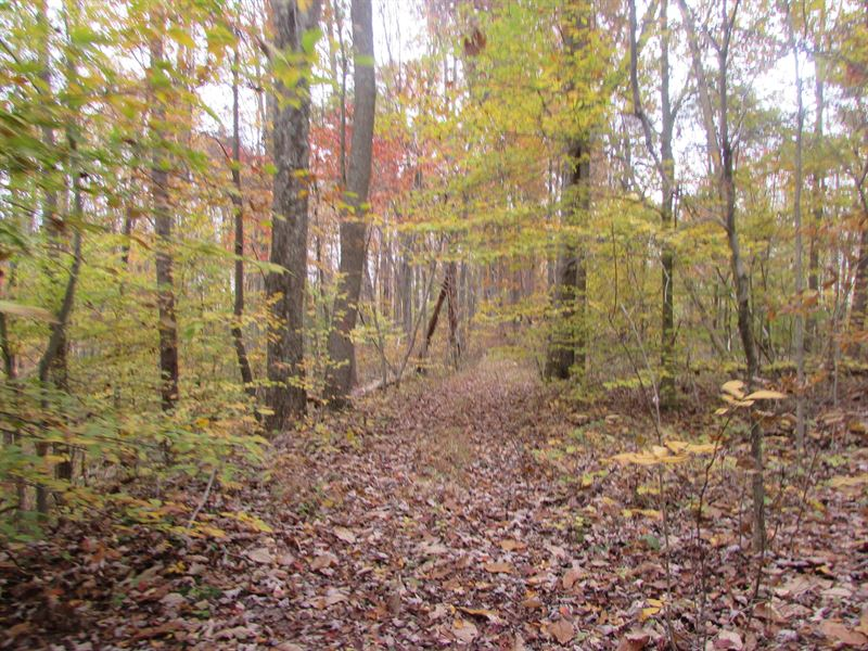 Wooded Land With Great Hunting : Pennsboro : Ritchie County : West Virginia