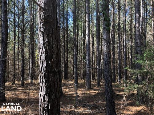 Small Timber & Hunting Tract : McShan : Pickens County : Alabama