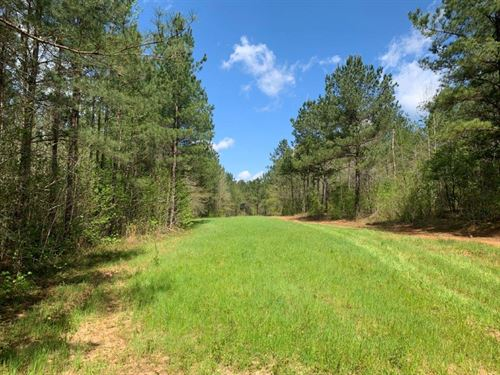 Deer Turkey Timber : Clopton : Henry County : Alabama