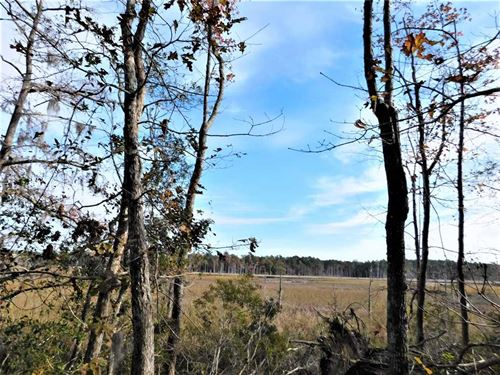 41.68 Acres in Georgetown County : Georgetown : South Carolina