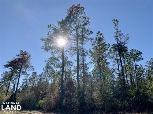 The Whitehouse Fork Road Hunting : Bay Minette : Baldwin County : Alabama