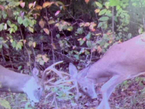 100 Acres Hunting : Hustonville : Casey County : Kentucky
