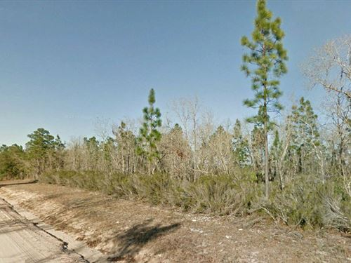 .20 Acre Lot Close to Flamingo Lake : Interlachen : Putnam County : Florida