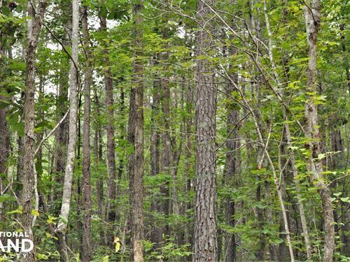Mud Creek Recreation And Timber Pro : North Johns : Jefferson County : Alabama