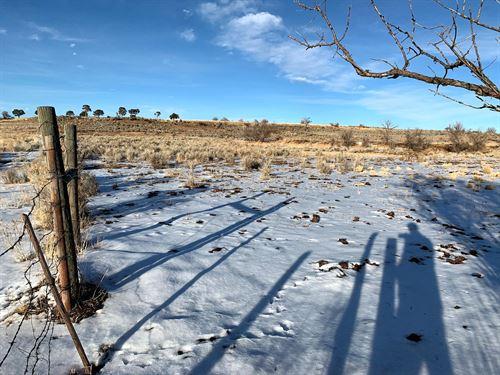 Land Grazing Cattle, Horses : Pleasant View : Montezuma County : Colorado