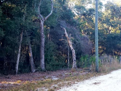 Vacant Land Chiefland, Levy County : Chiefland : Levy County : Florida