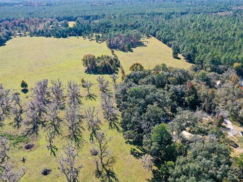 75 Acre Ranch- H-457 : Waldo : Alachua County : Florida