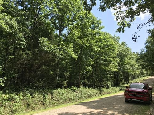 10 Acres, National Forest : Birch Tree : Shannon County : Missouri