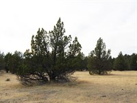 Large Rural Residential Lot : Alturas : Modoc County : California
