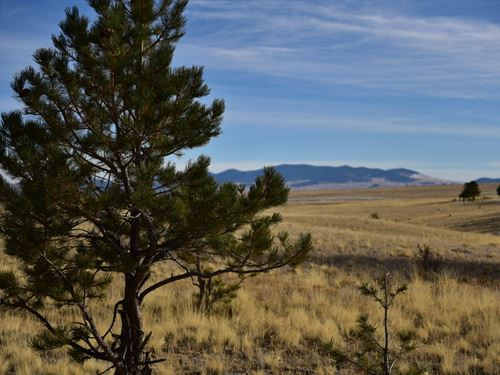 Land With Trees And Great Access : Hartsel : Park County : Colorado