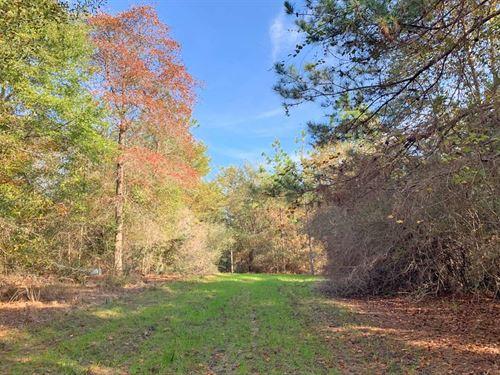 Hall Creek Tract : Century : Escambia County : Florida