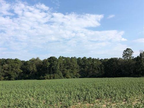 Harville Road Tract 2 : Statesboro : Bulloch County : Georgia