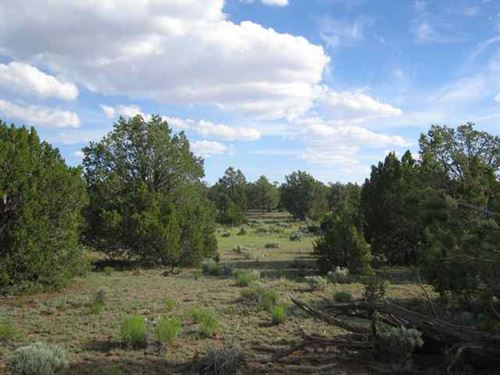 AZ Wilderness Ranch With 5th Wheel : Saint Johns : Apache County : Arizona