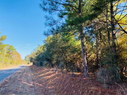 28 Acres / Oral Church Road : Tylertown : Walthall County : Mississippi