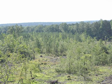 100 Acres Cutover  Pines  Hardwoods : West : Attala County : Mississippi