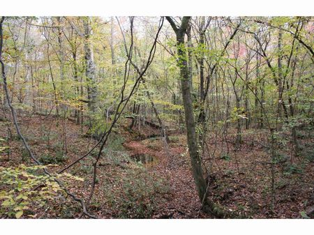 124 Acres Joins Homochitto Forest : Caseyville : Lincoln County : Mississippi