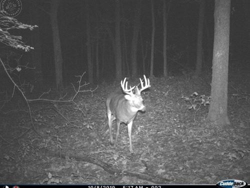 Prime Hunting Land Minutes From : Baraboo : Sauk County : Wisconsin