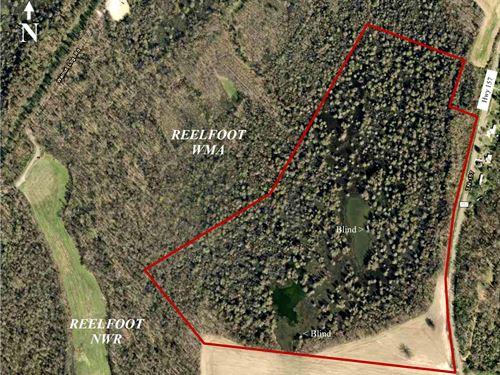 Reelfoot Lake -Duck, Deer, & Turkey : Walnut Log : Obion County : Tennessee