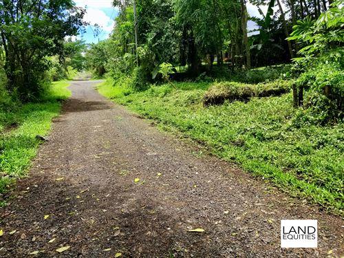 Fantstic Location + Power & Water : Pahoa : Hawaii County : Hawaii