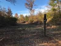Hunting Land or Potential Farm : Ashville : Saint Clair County : Alabama