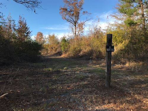 Hunting Land or Potential Farm : Ashville : Saint Clair County : Alabama