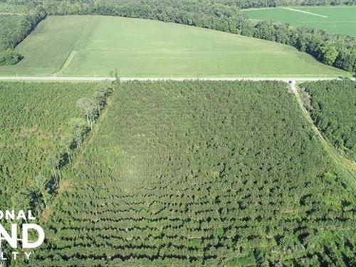 Pitt County Hunting Tract : Stokes : Pitt County : North Carolina