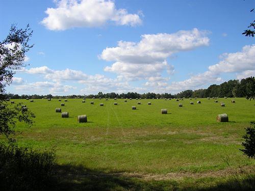 78 Acres In Lake Butler, FL : Lake Butler : Union County : Florida