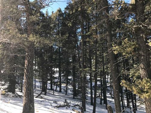 Colorado Mountain Estates : Florissant : Teller County : Colorado
