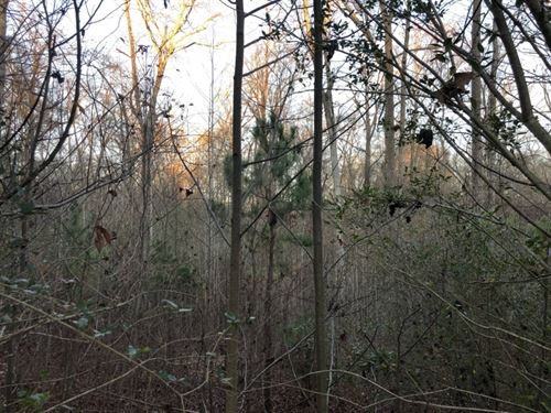 Large 1.1 Acre Lot Ready For Custom : Easley : Anderson County : South Carolina