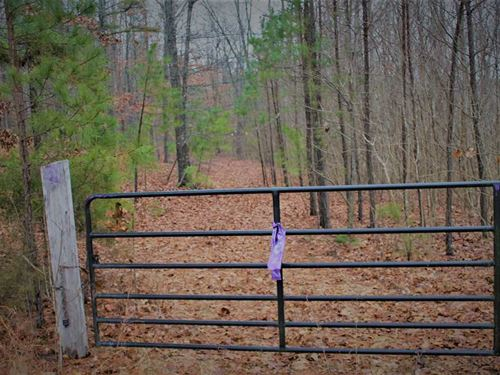 78 Wooded Acres in Douglas County : Ava : Douglas County : Missouri