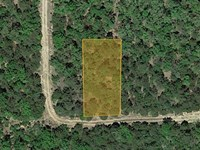 Forested Land Near The Lake : Diamond : Boone County : Arkansas